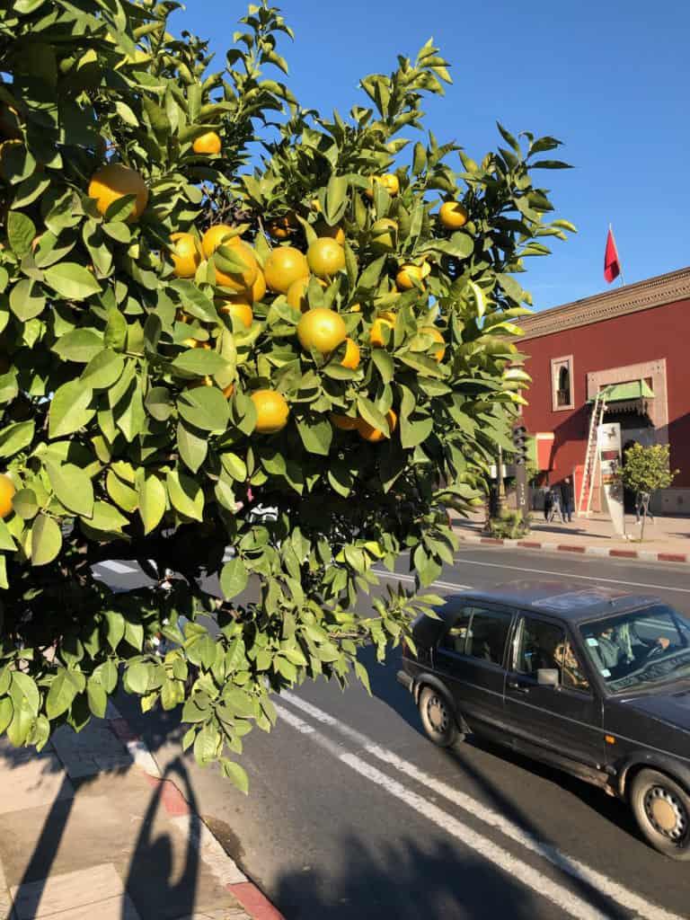 citroník u silnice