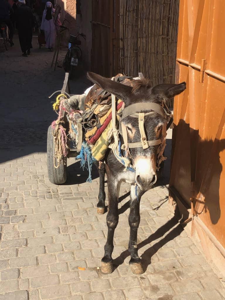 osli a koně se využívají stále na práci